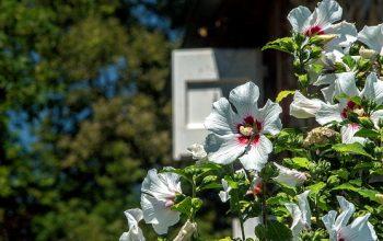 Fleurissement du village de Dourgne