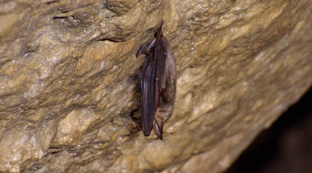 Animation dans la grotte du Castellas