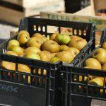 Cagettes de pommes