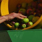 Pommes sur broyeuse