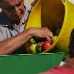Pommes et broyeuse